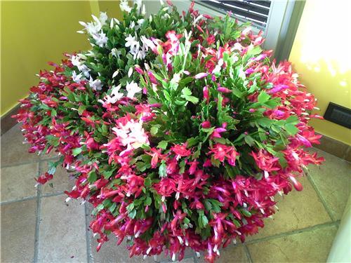 Giardino fiorito tutto l anno idee per la casa for Giardini fioriti tutto l anno