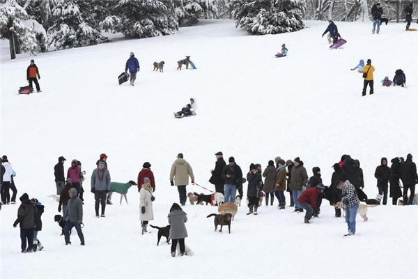 People gather to toboggan and walk their dogs in C... | Reuters.com