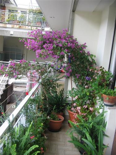 Piante per balconi le piante sfidano basse temperature - Idee per terrazzi ...