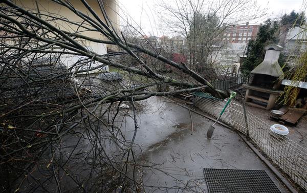 umgeknickte bäume versicherung