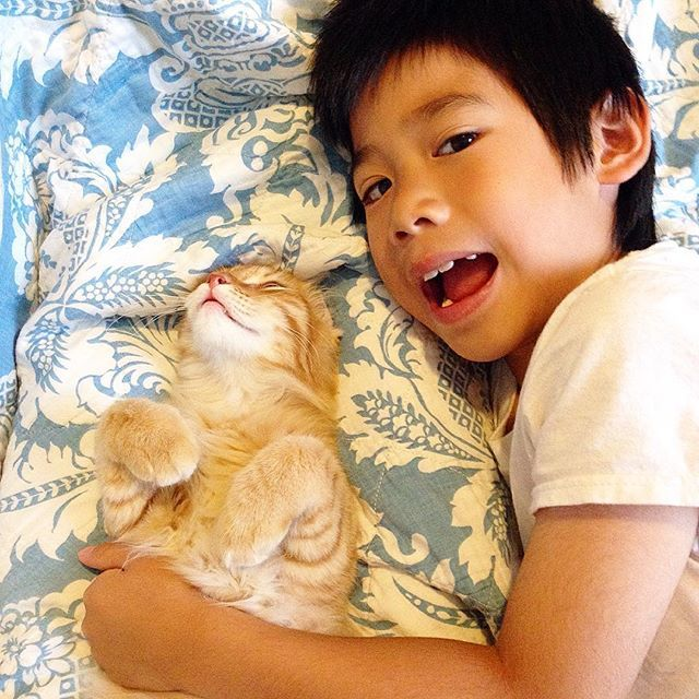 #niko #<b>nikolai #rossi</b> #kitten #siberian #siberiancat #catsofinstagram - 6060019d-e830-4234-8c56-8d6192648b56_1000