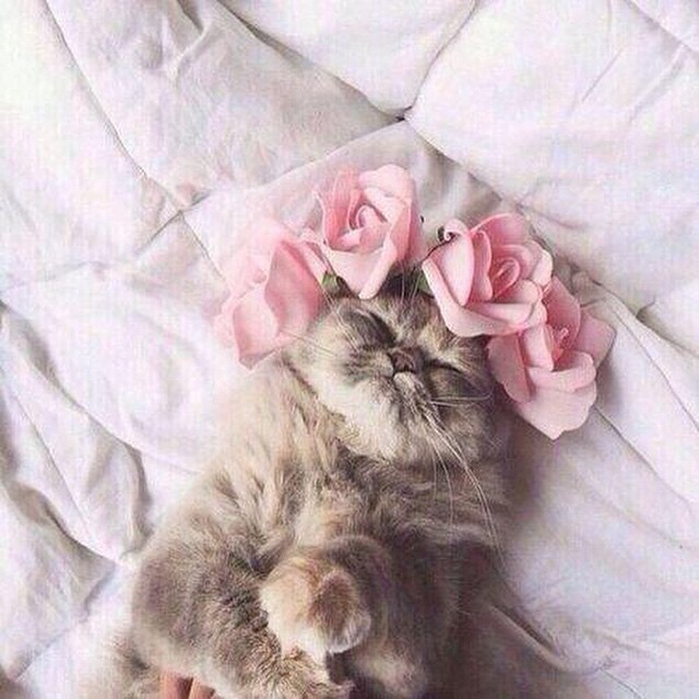 Image result for cat and flower crown