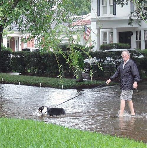 South Tampa Dog Walking