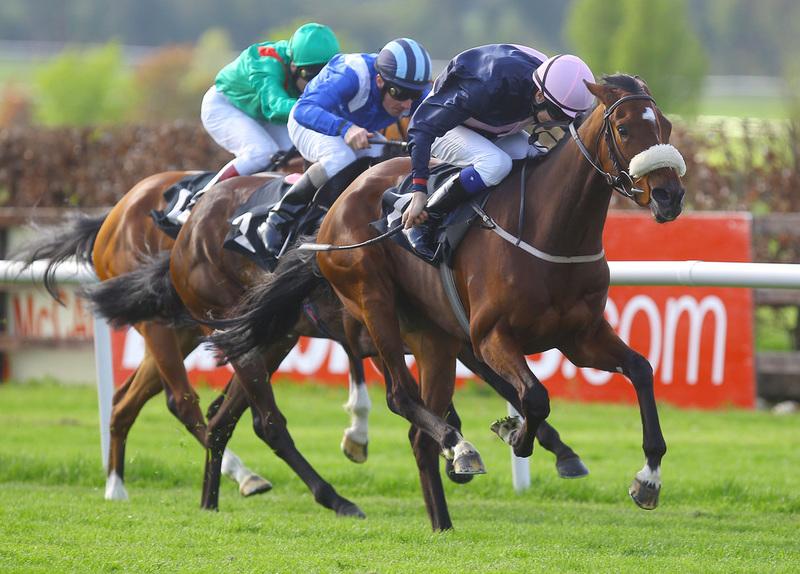 Rpr Horse Racing