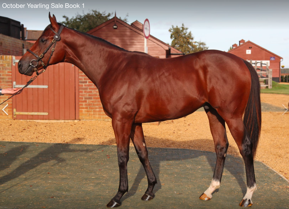 Day one Tattersalls October Sale Book 1