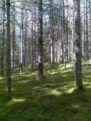 Tar taget till skogen