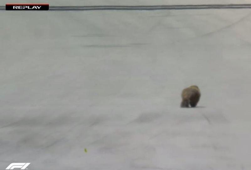 Otra marmota