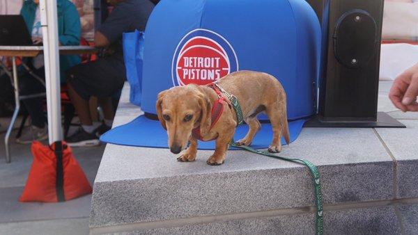 Detroit Pistons lose to Denver Nuggets, 95-92