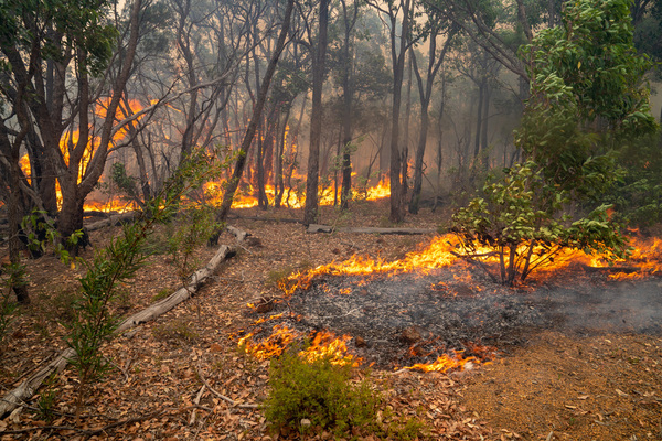 Trees and scrub appear to burn uncontrolled.