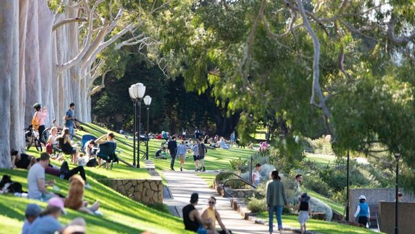Crowds of people enjoy the sunshine on the grass at Kings Park.